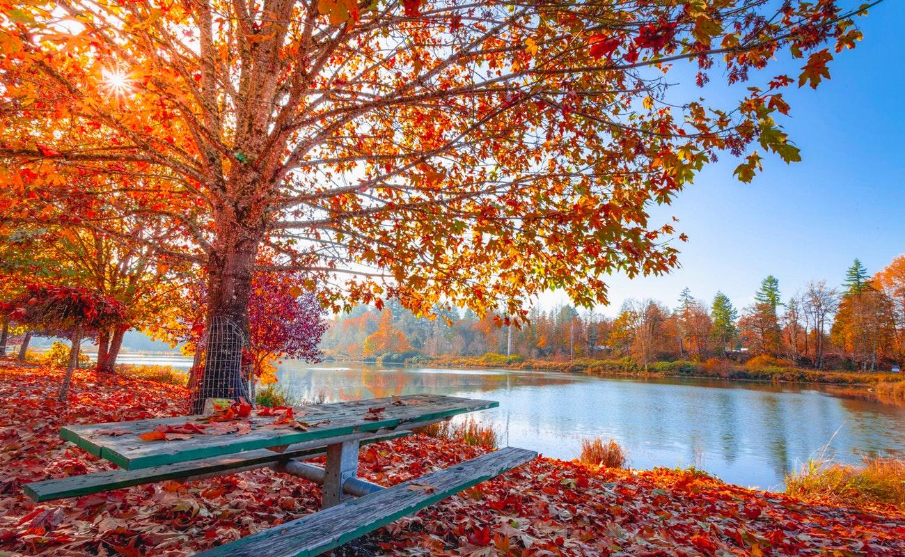 4 Seasons Photography – Autumn