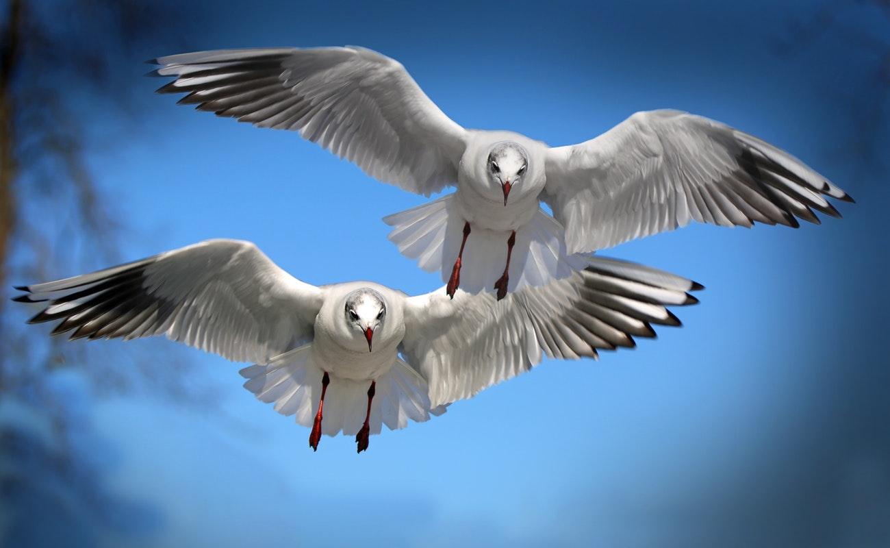 Birds Photography Showcase – the Inspiring Beauty of Birds