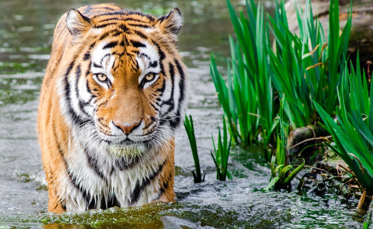 Wild Animals – Dangerous, Still Cute